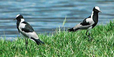 5days/4night Bird Ornithological Safari