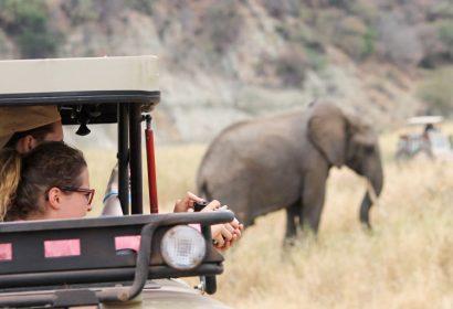 Photographt Safari