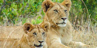 8days/7night Kenya to Tanzania Big Cats safari
