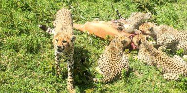 6days/5night Prey and Predator Safari