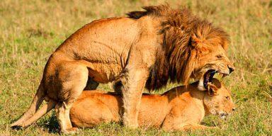 10days/9night Wildlife Honeymoon Safari